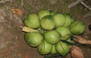 5 công dụng đơn giản của nước dừa bạn đã biết chưa