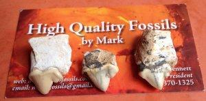 Trình Làng - Kịch độc - Mấy chiếc răng MÈO RĂNG KIẾM (SABER TOOTH CAT) tiền sử hóa thạch