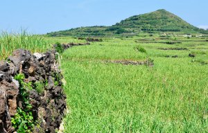 Đến đảo Lý Sơn có những ruộng bậc thang tuyệt đẹp khiến du khách nao lòng