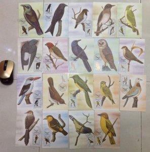 bán 19 postcard tem chim