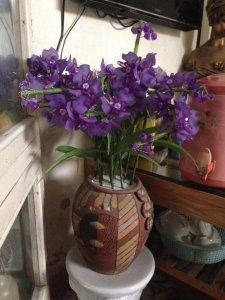 Hoa lan pha lê để bàn