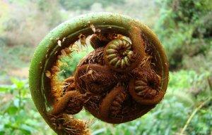 Những loại rau rất tốt cho cơ thể nhưng lại được mọc rất nhiều mà ít người biết đến