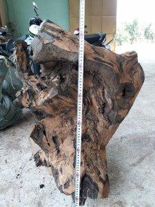 Mun sừng 37kg giá mềm mại