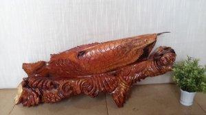 Cá ngân long Cẩm chỉ