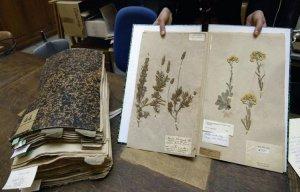 Hải quan Australia thiêu hủy Tiêu bản thực vật 230 năm tuổi của Pháp