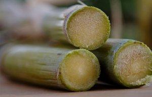 Những công dụng của nước mía và lợi ích tuyệt vời của cây mía đường đối với sức khỏe