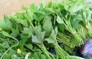 Những phương thuốc trị mụn nhọt bằng cây lá vô cùng hiệu quả