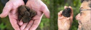 Nam-truffle-den-nam-cuc-den (6).jpg