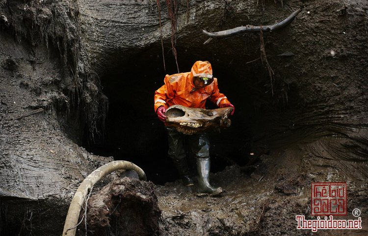 Theo-chan-nhung-ke-san-Nga-Voi-co-tai-Siberia-Nga (9).jpg