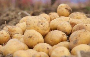 Những loại thực phẩm mọc mầm tuyệt đối không nên ăn vì sẽ gây nguy hiểm