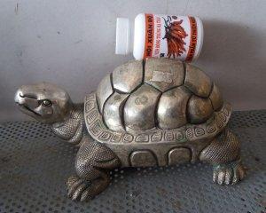 Rùa mạ bạc rất đẹp dài khoảng 20cm nặng gần 2kg