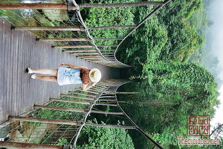Review-Tam-Dao-Huong-dan-chi-tiet-di-Tam-Đao-voi-gia-re-nhat-cho-cac-ban (15).jpg