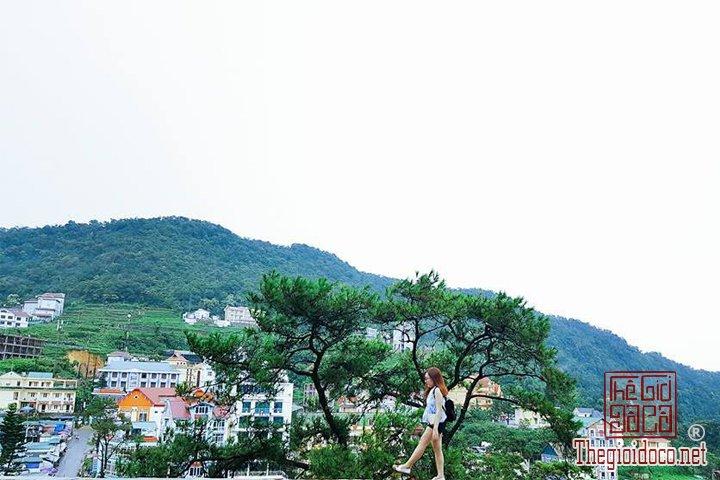 Review-Tam-Dao-Huong-dan-chi-tiet-di-Tam-Đao-voi-gia-re-nhat-cho-cac-ban (19).jpg