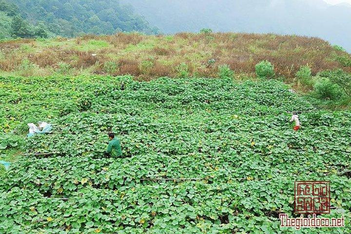 Review-Tam-Dao-Huong-dan-chi-tiet-di-Tam-Đao-voi-gia-re-nhat-cho-cac-ban (22).jpg