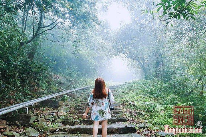 Review-Tam-Dao-Huong-dan-chi-tiet-di-Tam-Đao-voi-gia-re-nhat-cho-cac-ban (28).jpg