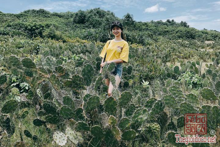 Review-Phu-Yen-Binh-Dinh-noi-cua-ve-dep-thuan-tuy-cho-nhung-ban-co-y-dinh-di (39).jpg