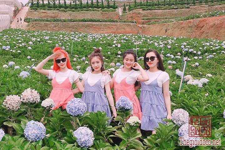 Review-Da-Lat-mong-mo-cuc-ky-chi-tiet-cho-cac-ban-tham-khao-khi-chuan-bi-di (3).jpg