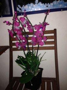 Chậu hoa lan pha lê hồng tím cực đẹp cao 65cm