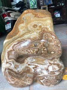 Cây đá can xít vàng, có hình mặt người