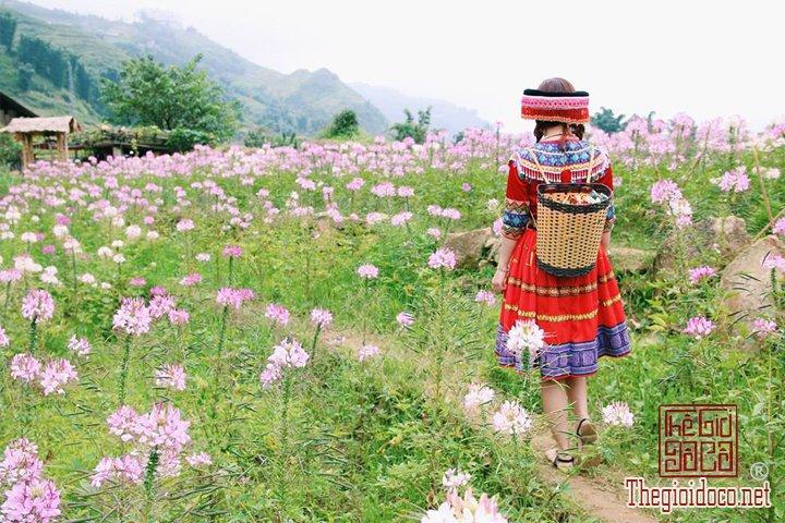 Review-Sapa-gia-re-3-ngay-3-dem-cua-ban-tre-cho-cac-ban-tham-khao (7).jpg