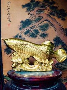 Cá rồng kim long
