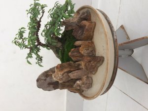 Tiểu cảnh gỗ hoá thạch