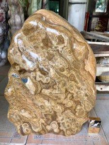Cây đá can xít vàng hoa, cao 60cm, giá 2 triệu