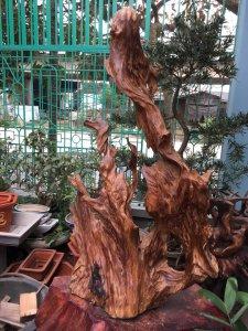 Lũa ngọc am Hà Giang đẹp ngất ngây,cao1mét 25cm