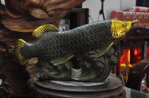 Cá rồng kim long ngậm tiền