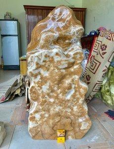 Cây đá can xít vàng, cao 1 mét