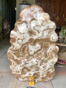 Cây đá can xít vàng, cao 83cm, giá 3tr500k