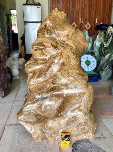 Cây đá can xít vàng, cao 85cm, giá 4 triệu.