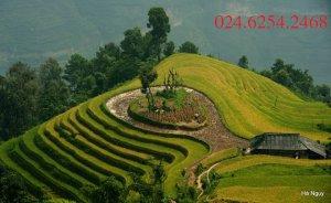 Cho Thuê Nhà mặt Phố Quang Trung-Hà Đông-Hà Nội (Liên hệ: 024.6254.2468)