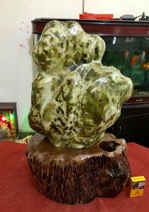 Cây đá xanh ngọc, cao 69cm