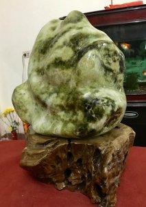 Cây đá xanh ngọc, cao 60cm, giá...